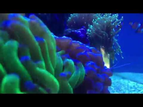 Red Sea Reefer 250 | Maintenance Weekend | Optical Sensor HACK | Dkh Testing Tips