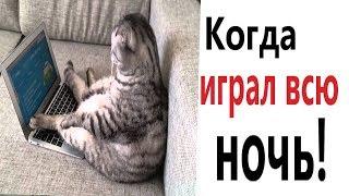 Лютые приколы. КОГДА ИГРАЛ ВСЮ НОЧЬ!!! Самое смешное видео! ТЕСТ НА ПСИХИКУ! – Domi Show!