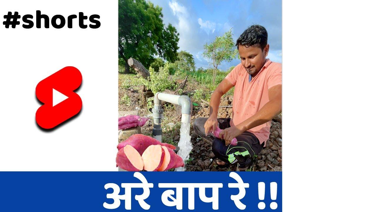 कितना किलो का शकरकंद होगा? #Shorts #indianfarmer #santoshjadhav