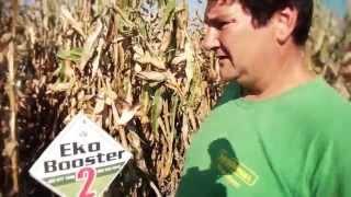 Efekti EkoBooster 2 , prehrane preko lista, na kukuruzu . 2015