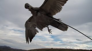 Приманка на голубя(Самодельная приманка для охоты на голубей., 2014-10-20T12:11:41.000Z)