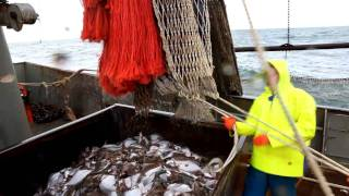 Beam trawling in the North Sea targetting flat fish