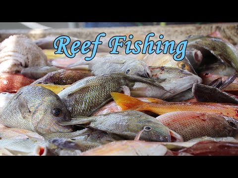 Half Day Fishing Charter In The Florida Keys