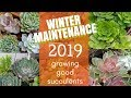 Succulent Winter Care - Plant Maintenance - How to Grow Healthy Succulents - Winter Maintenance