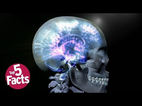 Top 5 Things You Should Know About Epilepsy
