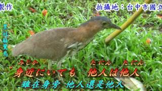 迷い鳥(迷途鳥).......作詩:麻生香太郎.......作曲:平尾昌晃....... ...