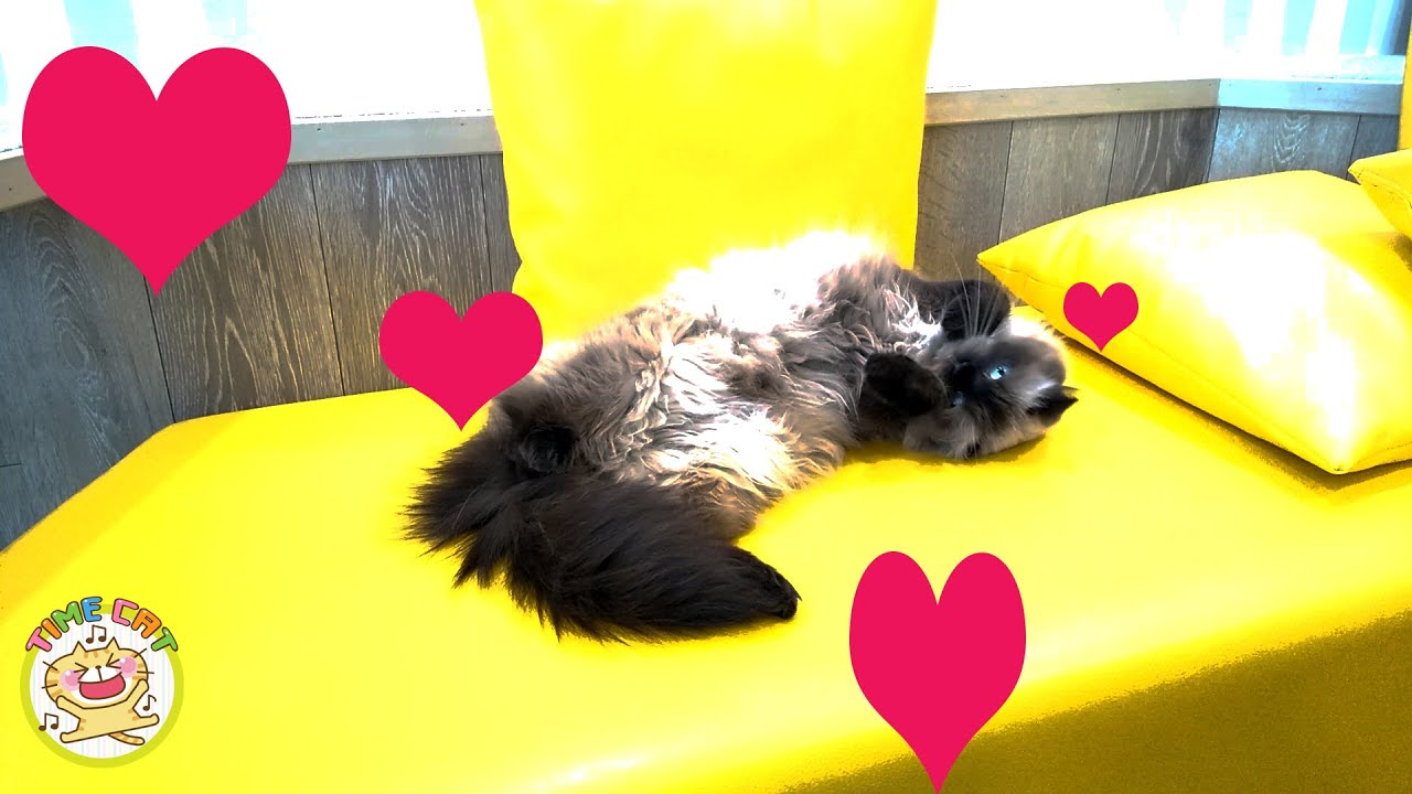NEW 2019 3Pcs Pet /_/_/_ Krazy Katnip