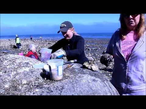 Oyster Harvest Sequim Bay WA 98382 -Lifestyle