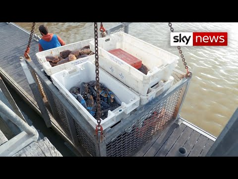 Brexit Talks In Deep Water Over Fishing Quota