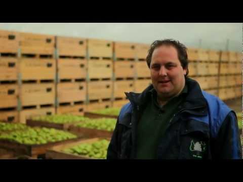 Hoe is de oogst van appels en peren? | Bidfood