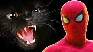 #12 Паук vs ЧЕРНАЯ КОШКА! Человек паук ps4 Прохождения игры Marvel's Spider Man