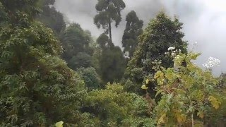 Grotto Kurseong Video - Darjeeling - Experience West Bengal - The Sweetest Part of Incredible India