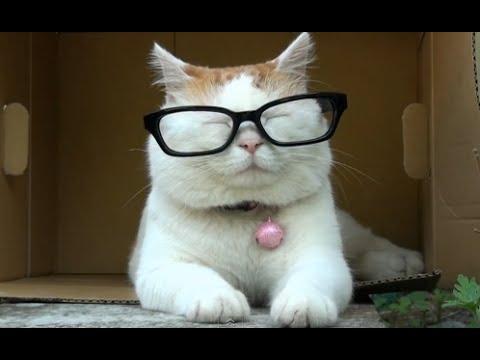 Сколько лет вашему коту по человеческим меркам?