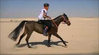 FEI World Endurance Championship Abu Dhabi YR & J 2011