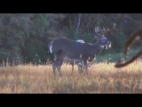 Team Yukon Outdoors: UFFDA Whitetail Deer Hunt (2014)