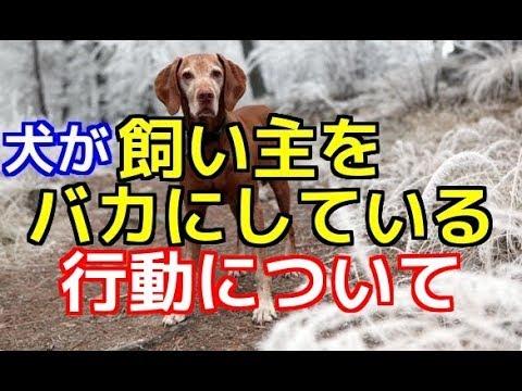【愛犬のための知識】愛犬が飼い主をバカにしている行動とは【犬を知る】
