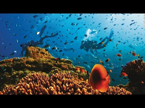 Why You Need To Experience The Great Barrier Reef