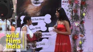 Shih Tzu Participates In A Dog Show At Ansal Plaza, Delhi