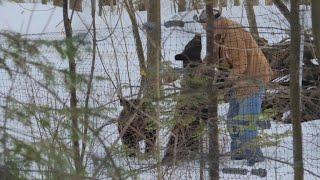 Step into the world of Ben Kilham, the American bear whisperer