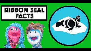 Arctic Seal Song | Learn about Seals | Ribbon Seal | Story time with Annie & Rocco