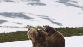 Game2: winter france télé réalité en Sibérie Survie