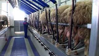 MidiLine SG300 DeLaval pour Brebis et chèvres