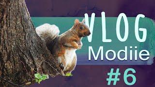 Vlog Modiie : Dernière semaine à Montréal