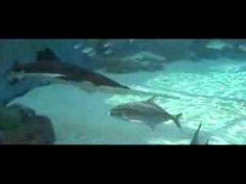 Aquarium Of The Pacific Youtube