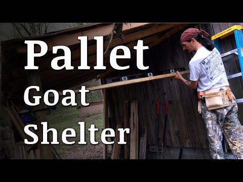 build-a-goat-shelter-with-pallets