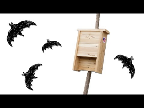 Find the best bat house & where NOT to place it