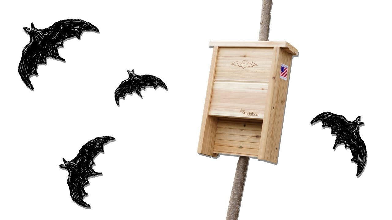 Find The Best Bat House Where Not To Place It
