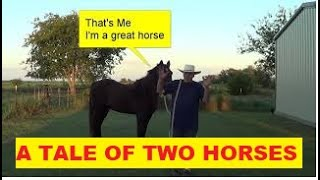 A Tale Of Two Horses - A Good Horse & A Bad Horse - Do You Know Which One Is Good?