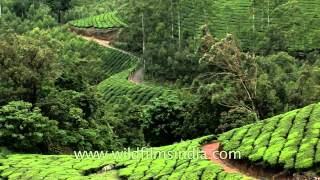 Winding tea plantation roads in Kerala