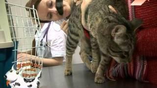 Операция кастрация кота. Кастрация котов последствия