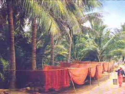 Them Hoang - Phi Hai
