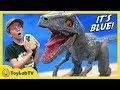 Raptor Blue & Surprise Egg Dinosaurs! Jurassic World Fallen Kingdom Alpha Training Blue Toy Dinosaur