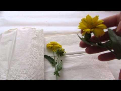 Как правильно заготовить сухоцветы и засушить гербарий