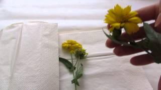 видео Как сушить цветы и растения?