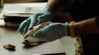 Дэвид Линч: Жизнь в искусстве - Trailer