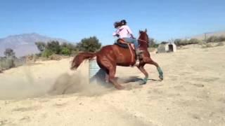 Sorrel Quarter Horse Mare for Sale