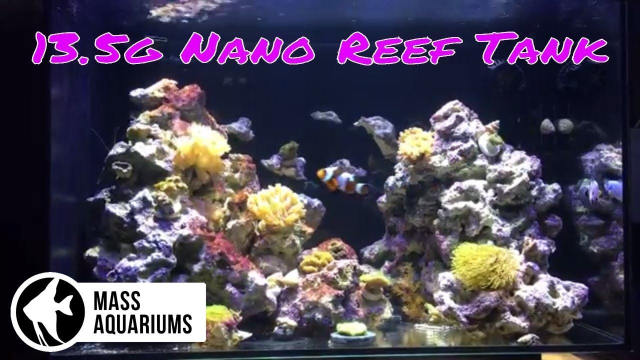 fluval evo 13 5 gallon nano reef tank plus a ton of sponsored