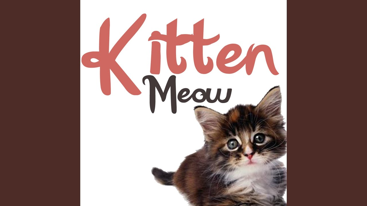 Kitten Meowing Sound Effect Ringtone Youtube