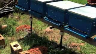 Beekeeping: Building Ant Proof Hive Stands(BubbaTanicals.com | HomesteadLiberty.com We've lost several bee colonies to ants recently. This video walks through the process of building a hive stand that ..., 2013-08-12T19:52:15.000Z)