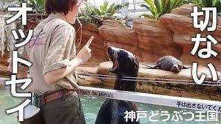 神戸市中央区『神戸どうぶつ王国』 スマイルを披露してエサをもらう先輩...