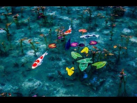 Monet 39 s pond seki city gifu prefecture japan youtube for Koi pond quezon city
