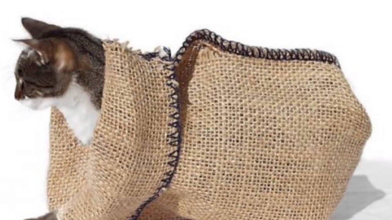 кот в мешке картинка прозрачный фон бытовом