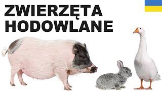 Польська для початківців - Cвійські тварини 2 (Zwierzęta hodowlane)
