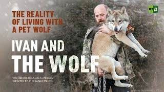 Baixar Ivan and the Wolf. The reality of living with a pet wolf