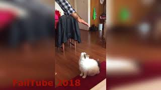 Cat FAILS 2018  !!!! Part1
