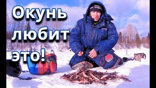 ОКУНЬ ЛЮБИТ ЭТО! Бешеный клёв окуня - Болен Рыбалкой №480